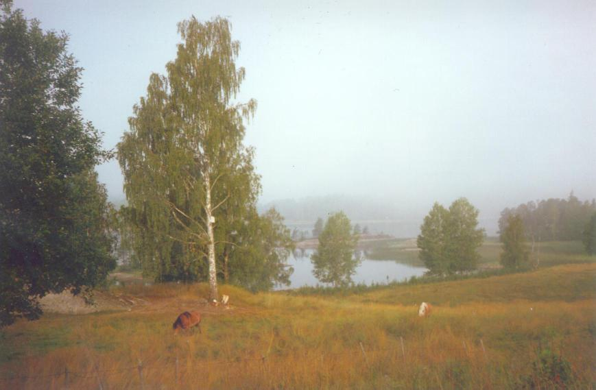 Early morning below the house, with horses in the field